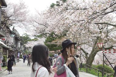 令人神迷的櫻花美景.jpg